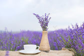 Lavender composition on field. — Stock Photo