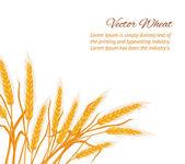 Wheat ear card. — Stock Vector