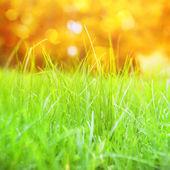 Bokeh ile çimen. — Stok fotoğraf