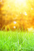 Grass with bokeh. — Stock Photo