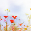 Field with grass, violet flowers and red. — Stock Photo #51251663