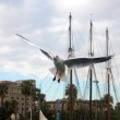 Sea gull with sailing boat — Stock Photo