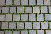 напольная плитка дорога с зеленое растение — Стоковое фото