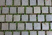 Pavimento piastrelle strada con pianta verde — Foto Stock