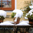 Stock Photo: Potted plants with snow