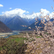 Nyingchi Prefecture in Tibet spring — Stock Photo