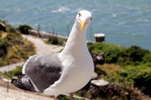 Sea gull is looking at — Stock Photo