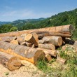 Lumber in mountains — Stock Photo