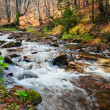 Mountain river forest — Stock Photo #23578301