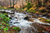 Mountain river the forest — Stock Photo