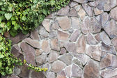 Stone wall with ivy — Stock Photo