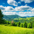 Meadow in mountains - Foto Stock
