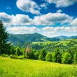 Meadow in mountains - Stockfoto