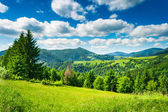 Meadow in mountains — Stock Photo