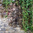 Royalty-Free Stock Photo: Wall of river stones with ivy