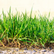 Grass growing out of stone — Stock Photo
