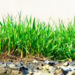 Royalty-Free Stock Photo: Grass growing out of stone