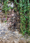 Wall of river stones with ivy — Stock Photo
