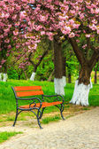 Bench on the pavement in the park on a background of grass and s — Stock Photo