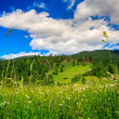 Alpine meadow with tall grass — Stock Photo #25185077
