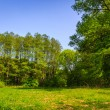 Forest glade in shade of trees — Stock Photo #25186071