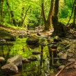 In old forest stream — Stock Photo #25186305