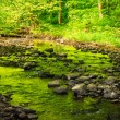 Mountain stream in old forest — Stock Photo #25186545