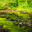Mountain stream in the old forest — Stock Photo
