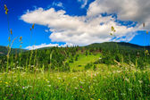 Alpine meadow with tall grass — Stock Photo