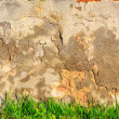 Grass infront of scratched and cracked wall — 图库照片