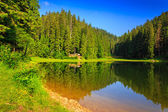 Pine forest and lake early in the morning — Stock Photo