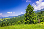 Horská jehličnatého lesa v dobré letní počasí — Stock fotografie
