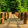 Horisontal wooden bridge disappears in forest — Stock Photo #28099695