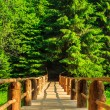 Vertical wooden bridge disappears in forest — Stock Photo #28099699