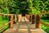 Horisontal wooden bridge disappears in forest — Stock Photo
