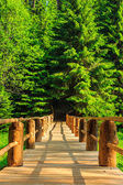 Vertical wooden bridge disappears in forest — Stock Photo