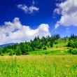 Green lawn with hill and trees under the summer sky — Stock Photo
