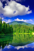 Morning in forest near lake in mountains — Stock Photo