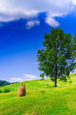 Mountain Stack of hay with trees vertical — ストック写真