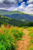 Bergsstig i det höga gräset — Stockfoto