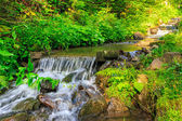 Forest stream splashes on the rock cascade — Stock Photo