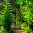 Narrow path in forest with small wooden fence turn to right — Stock Photo #28404421