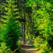 Stock Photo: Narrow path in forest with small wooden fence turn to the right