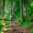 Stock Photo: Narrow mountain path in coniferous forest with small wooden fe