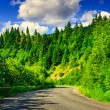 Route through the mountains to the pine forest on a summer eveni — Stock Photo #28404499