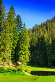 Gazebo and a small lake next to the forest in the mountains in c — Stock Photo