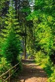 Smal pad in forest met kleine houten hek draai aan het recht — Stockfoto