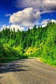 Väg genom bergen till tallskogen på en sommar eveni — Stockfoto