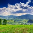 Meadow with trees and shrubs in mountains massif away in the bac — Stock Photo