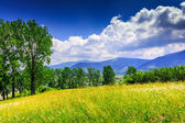 Prado grande com ervas, árvores, arbustos e nuvens sobre a montanha — Foto Stock